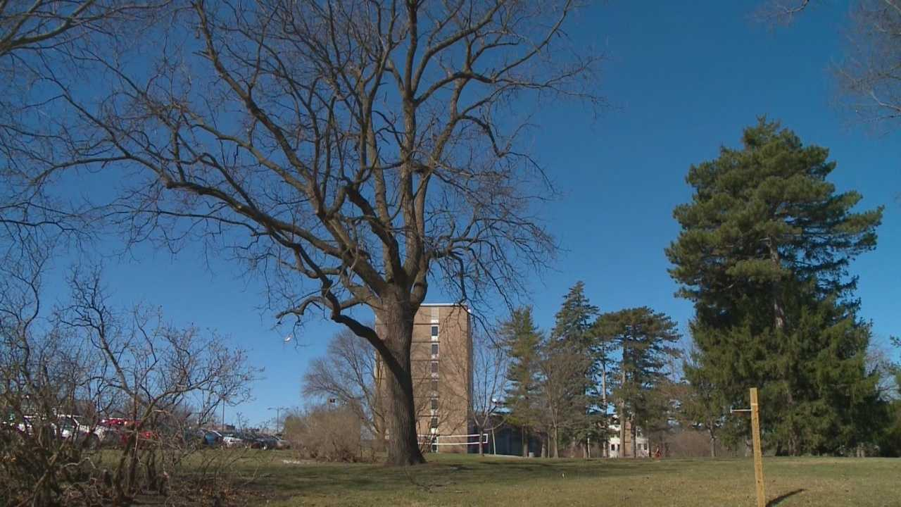 A couple of nearly 200-year-old trees are set to be chopped down at Iowa State University, and many are unhappy with the decision.