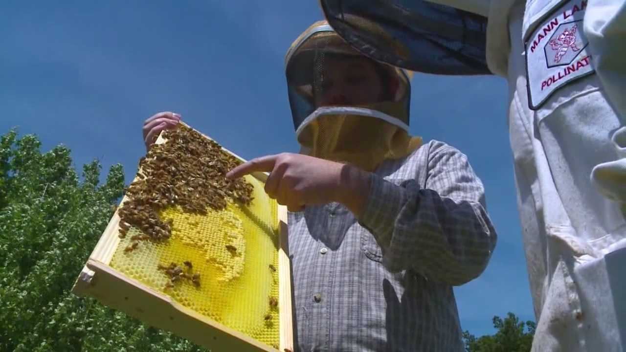 The lost of bees across Iowa could have a big impact on agriculture and all of us.