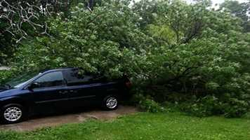 Trees down in Iowa Falls from first line of thunderstorms