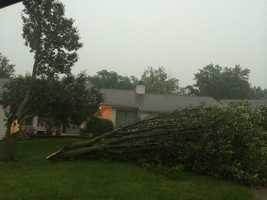 Tree down in Stuart