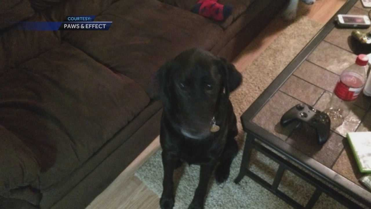 KCCI spoke exclusively with the woman who paired Wade Baker with his specially trained dog three years ago.