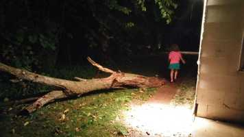 Tree damage in Boone.