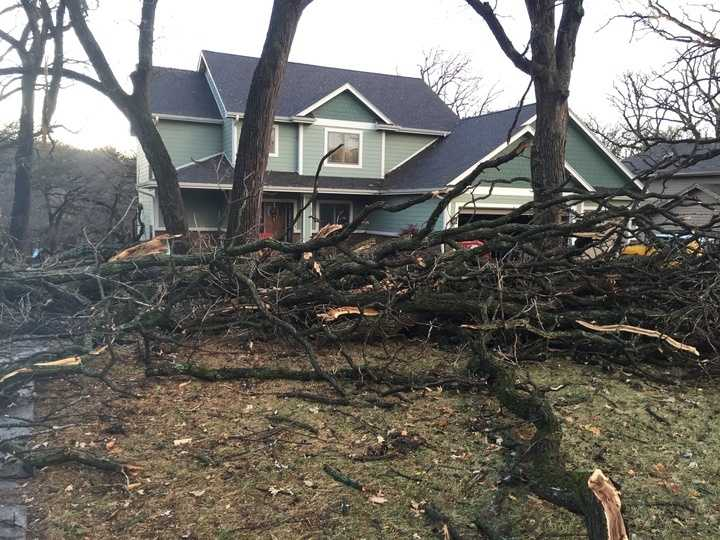 Tree damage in Des Moines