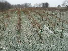 4:30 p.m. snow falling at Summerset Winery near Indianola.