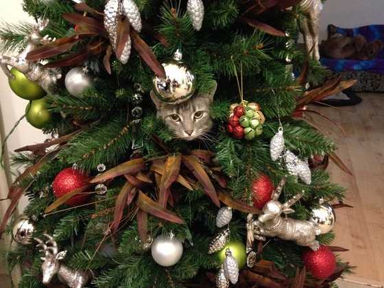 Look closely -- cats really get into Christmas!