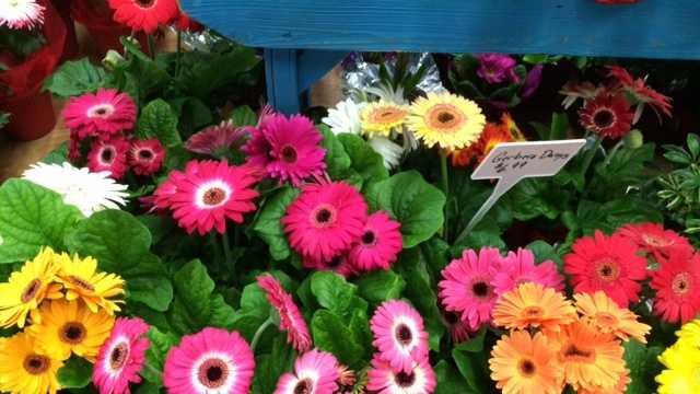 Take a sneak peek inside the Home + Garden Show