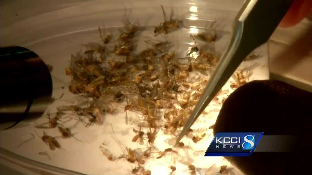 Department of Public Health officials have tested between 20 and 30 Iowans for Zika.