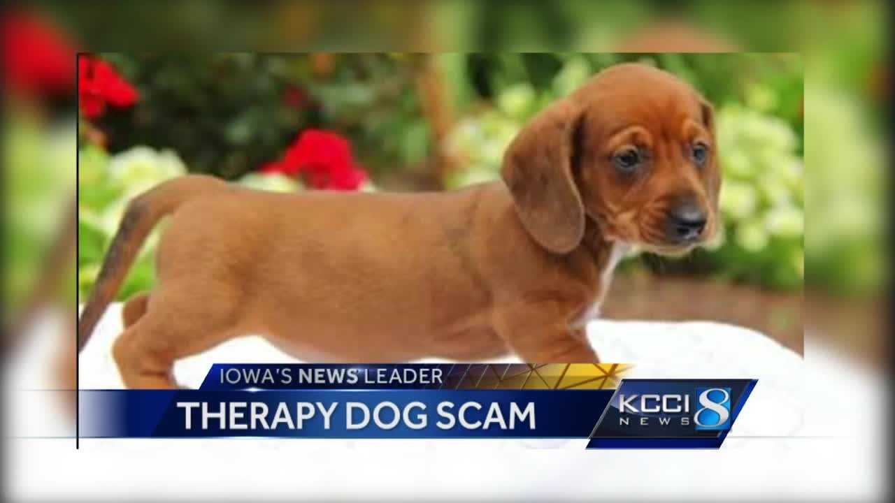 therapy dog scam