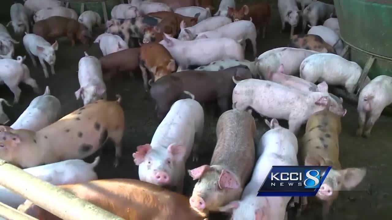 Mason City City Council rejected plans to bring a Prestage Farms hog processing plant there last Wednesday.
