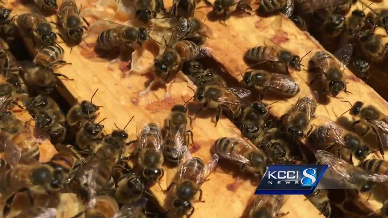 An investigation is underway to locate the missing beehives.