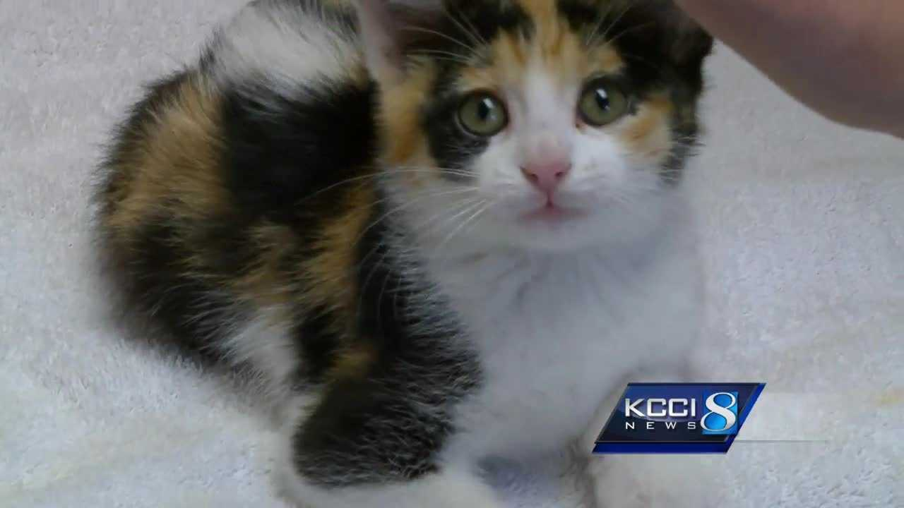 A 5-week-old kitten used up one of her nine lives over the weekend in West Des Moines.