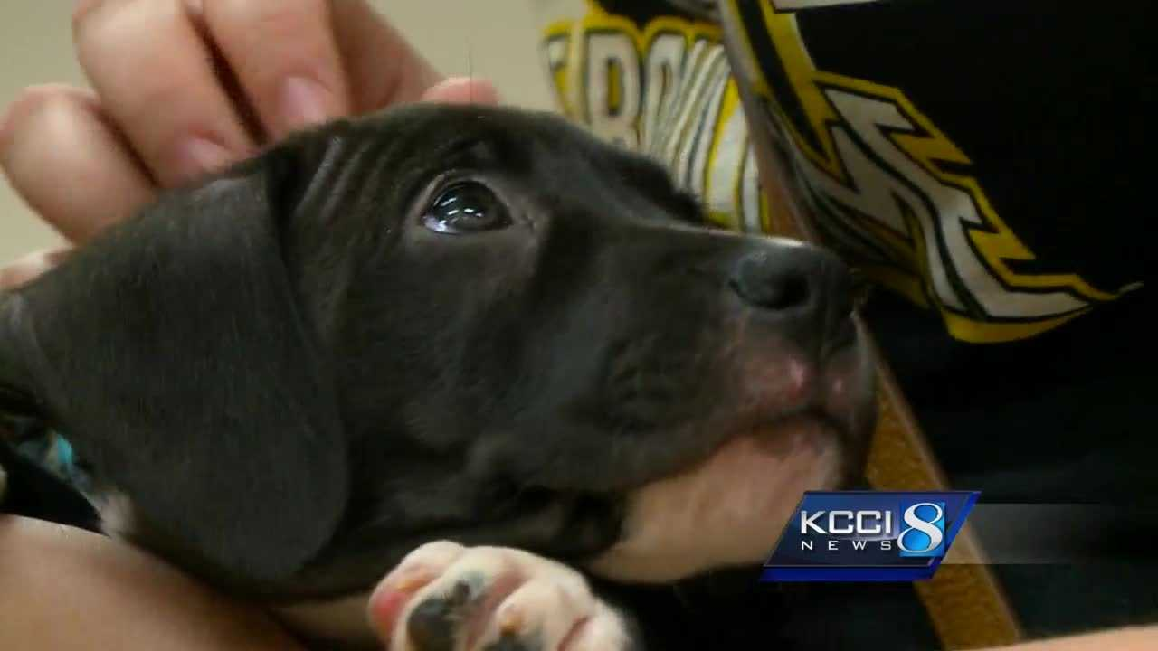Finding new methods of adoption has become sort of a science for the Animal Rescue League of Iowa.