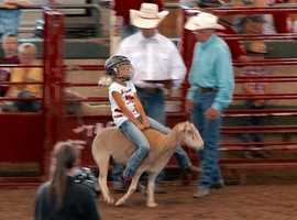 Mutton Busting at the Iowa State Fair