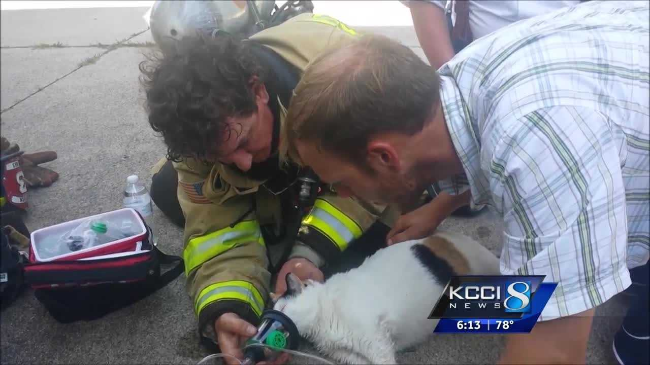 The Ames Fire Department shared a touching video on Facebook, showing the moment rescuers revived a cat.