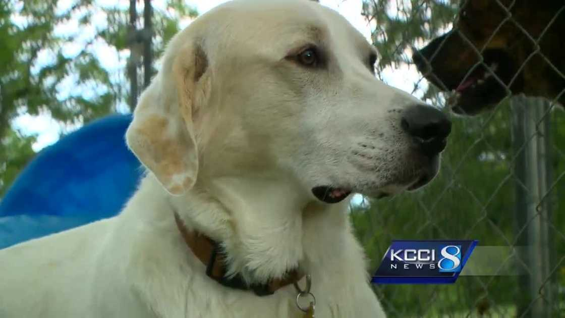 img-Nonprofit-animal-rescue-seeks-new-facility-starts-campaign.jpg