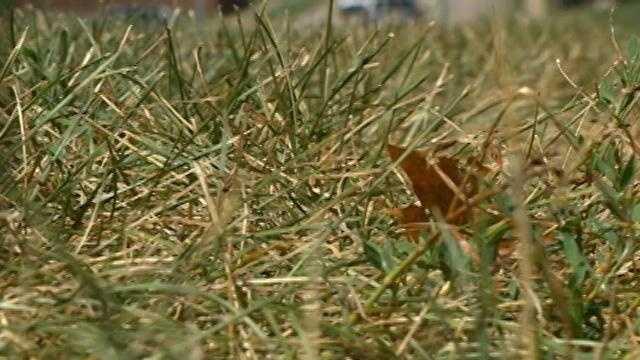 Brown Lawn dead grass yard - 28743924