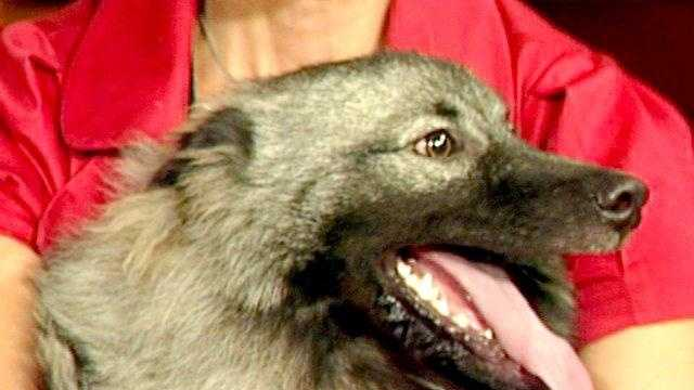 Dog Arl Cu Face - 20949832