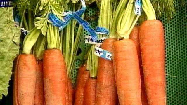 Garden Carrot generic - 19242895