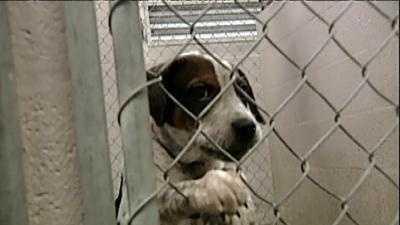 animal shelter dog puppy generic - 13273351