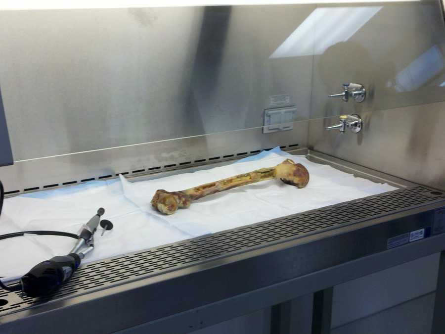 DOJ lab...donated human bone for training