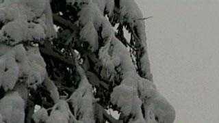 snow tree file generic - 14801263