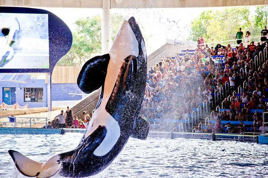 Sea World San Antonio, TXAt the Gate ADULT $59.99&#x3B; CHILD $49.99 (+ tax)Online: ADULT $49.99&#x3B; CHILD $39.99  (+ tax)