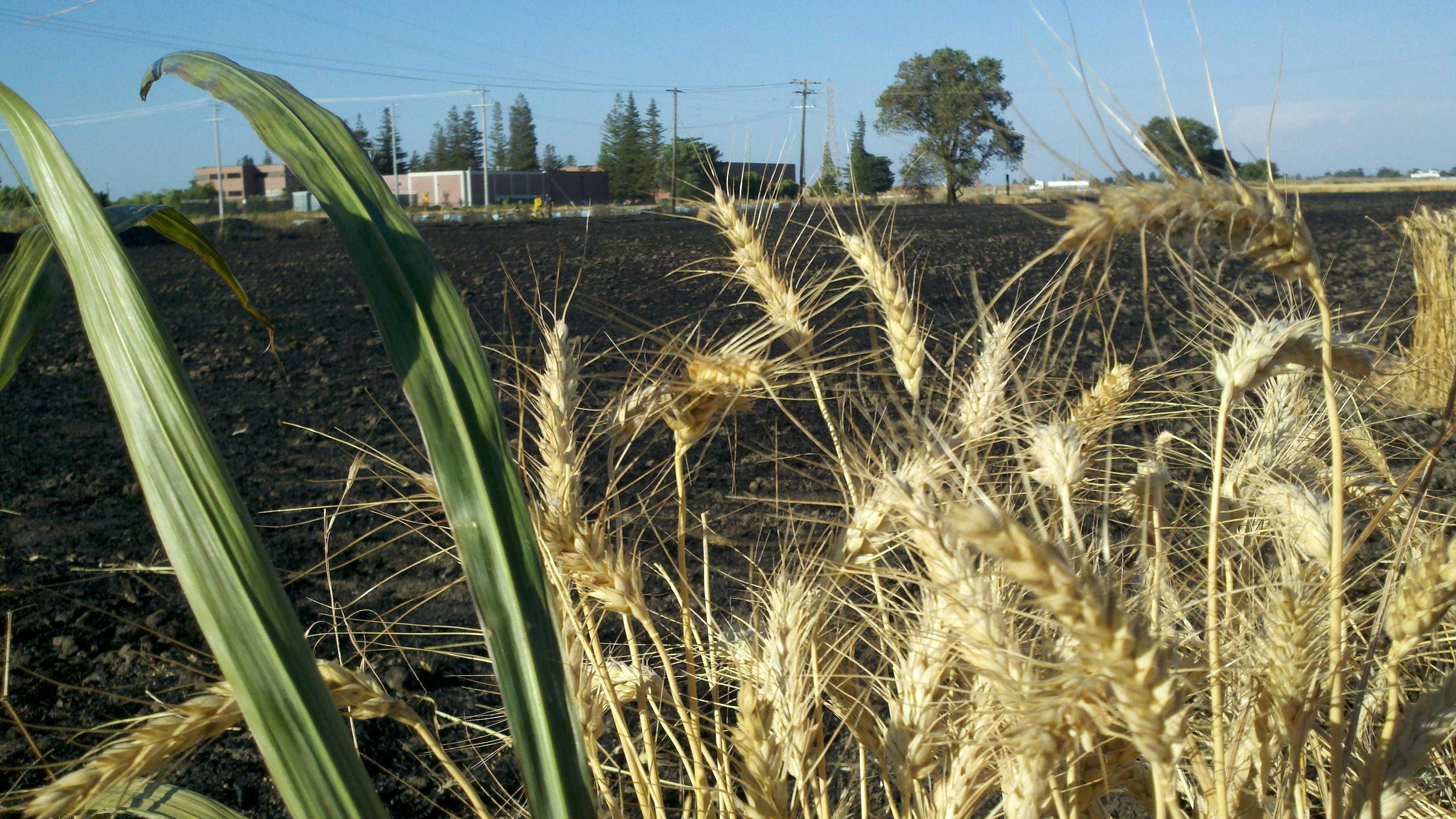 A fire burned about three acres of a wheat field near Freeport.