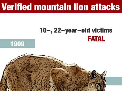 In July 1909, two victims, ages 10 and 22 died in a mountain lion attack in Santa Clara County.