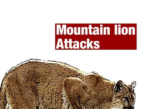 California has had 15 confirmed mountain lion attacks since 1890, including this most recent one in Nevada County. See some details of each attack. Source: California Department of Fish and Game