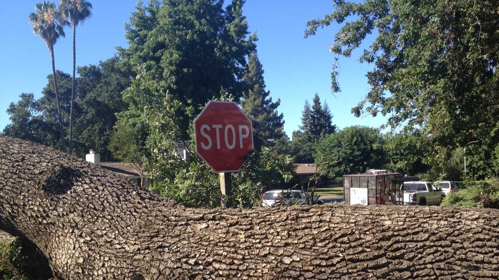 An estimated 30,000-pound tree toppled along American River Drive.Read full story