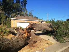 It crushed a section of roof and narrowly missed an elderly woman inside, said a Sacramento County tree crew.