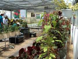 A wide variety of plants can be found in the Ag Ventureland area.