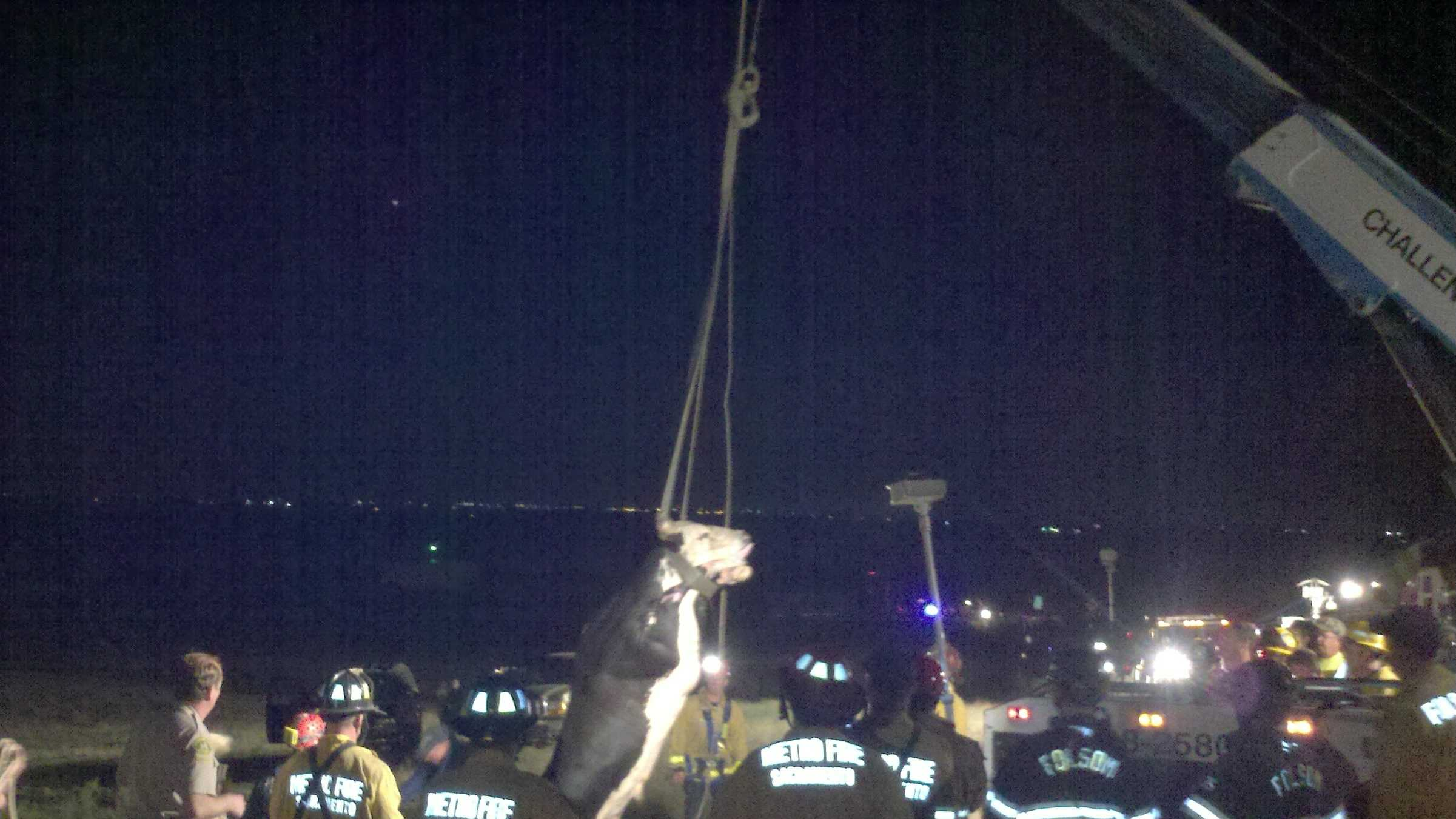 The bull is pulled out of the well after midnight Wednesday morning. The bull recovered in the field afterward.