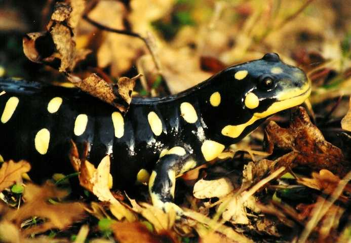 What: Critters of the RiverWhere: Effie Yeaw Nature CenterWhen: Sun. 1:30 p.m.Click here for more information on this event.