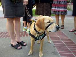Scheduled speakers for Monday's event included the president of the Board of Guide Dogs for the Blind.