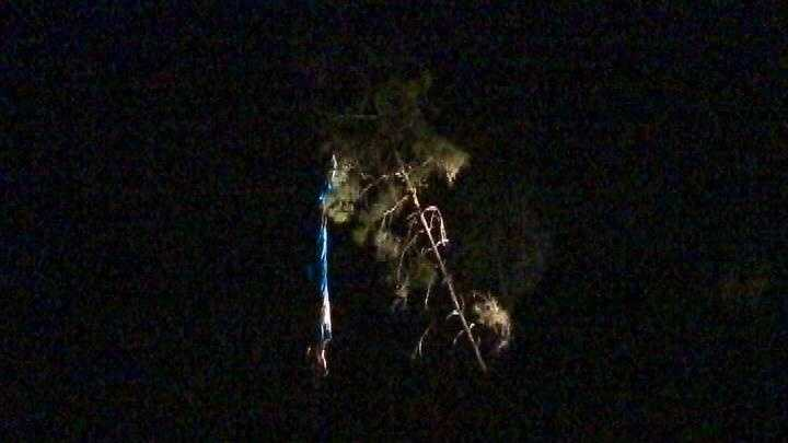 A BASE jumper got tangled in a tree Monday evening after jumping off the Foresthill Bridge.