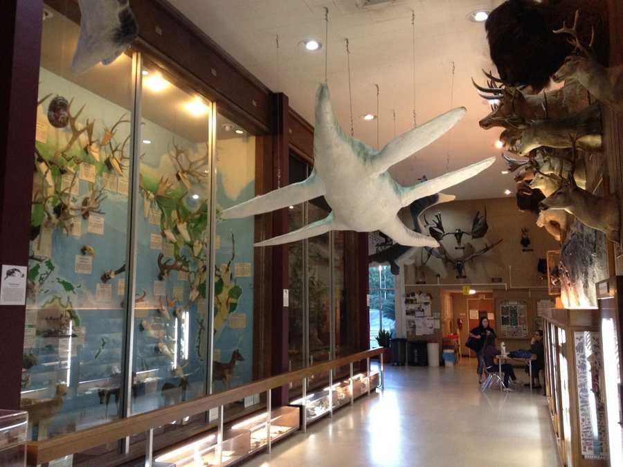 Rocklin Sierra College Museum Of Natural History