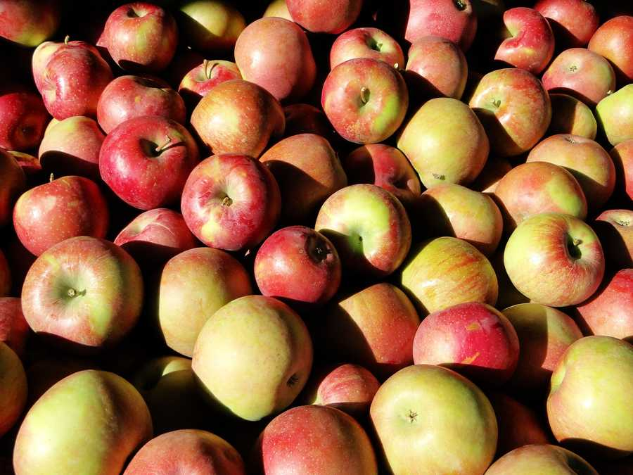 Planning a trip to Apple Hill? A trip from Sacramento to Camino is about 104 milesround trip -- that's about 3.46 gallons.