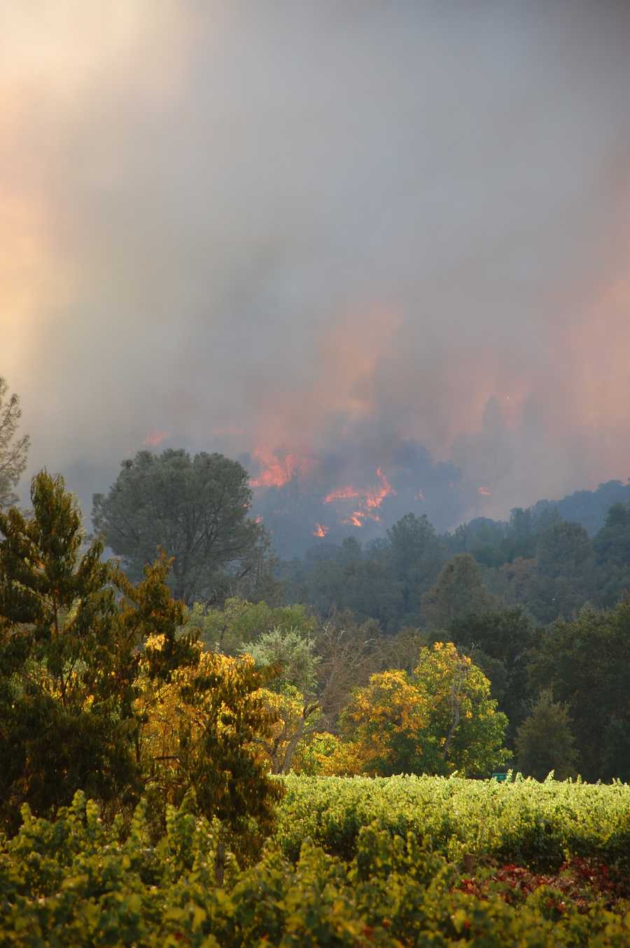 Cal Fire firefighters are optimistic that next week's weather forecast includes rain, which would help bring the state's fire season to an end.