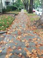 Fall leaves, too wet to kick around, cover a Midtown sidewalk.