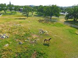 Horses roam free on fenced property near the arena barn.