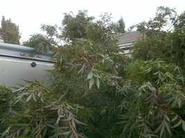 Here is damaged from Monday's storm in Elk Grove, where the NWS confirmed a EF1 tornado.