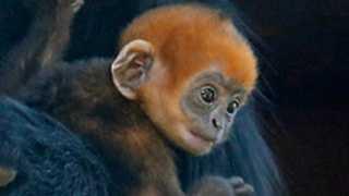 Romo-monkey-110112.jpg