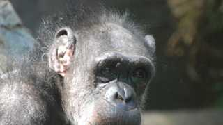 Josie enjoyed painting and often went through phases with the colors she used.