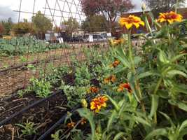 Keep your bees and ladybugs. Pollinators and other beneficial insects will work hard to keep the garden growing and pests away.