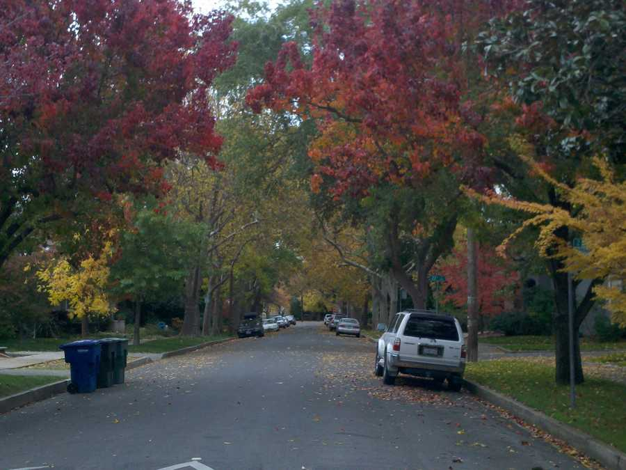 Check out these photos from the Curtis Park neighborhood Tuesday that show trees turning yellow, red and orange.