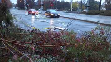 Wet weather caused several trees to come down across Northern California on Wednesday morning.