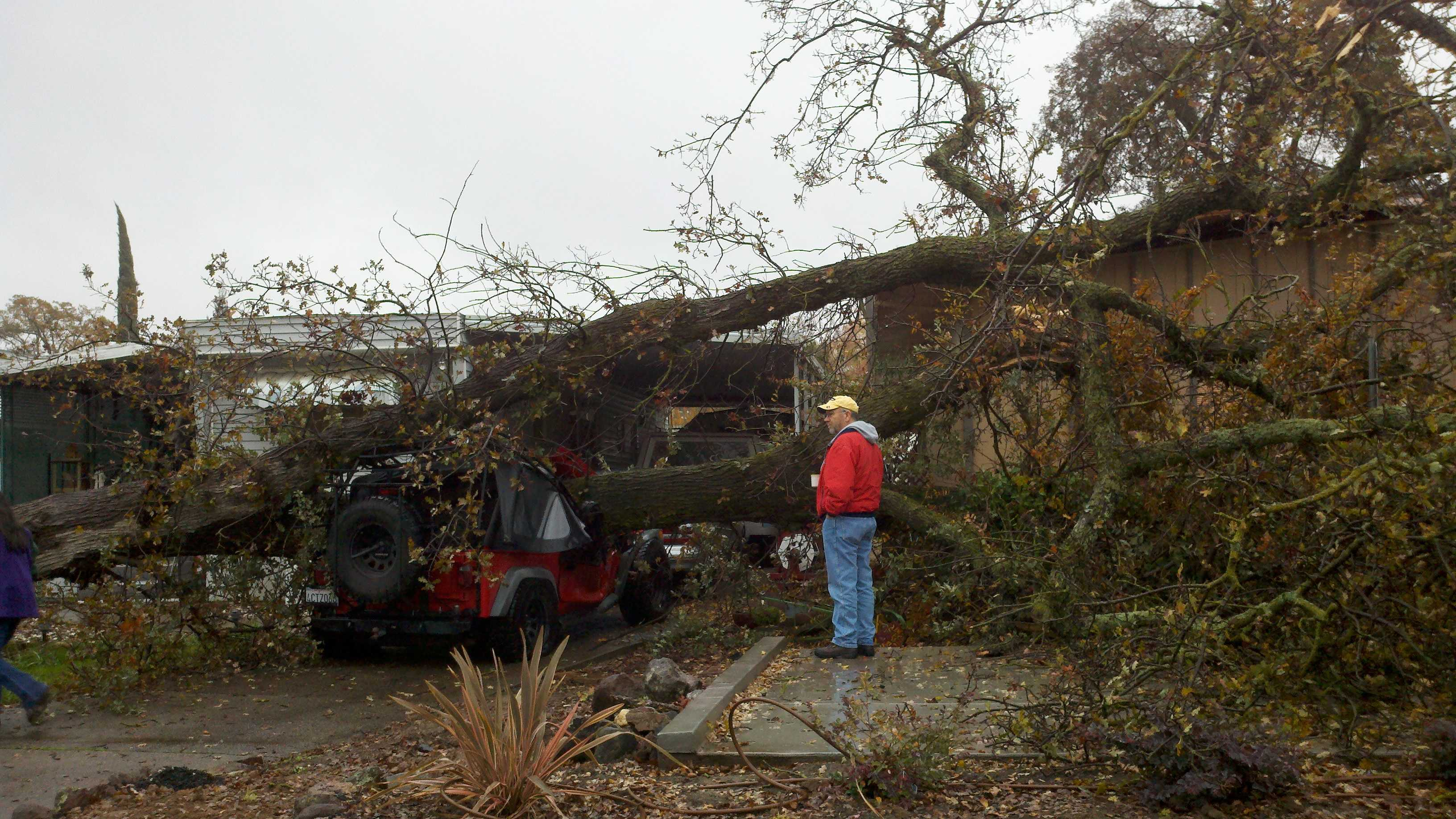 A red Jeep sits underneath an oak tree that fell during Wednesday morning's rain.