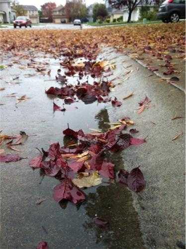 WednesdayA sidewalk and gutter is filled with soaked leaves in an Elk Grove neighborhood.