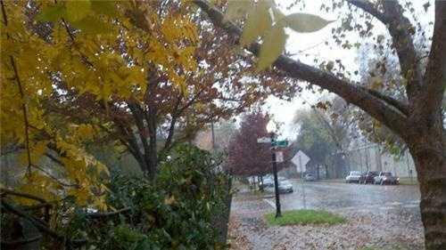WednesdayPlenty of leaves come down near downtown Sacramento.